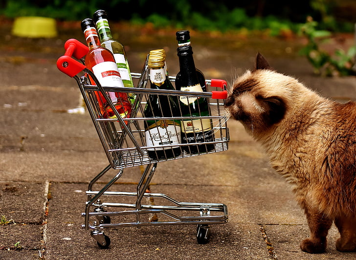 brown cat standing near shopping cart