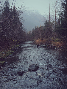 river beside bare trees at daytime