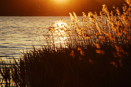 brown flower near body of water during golden hour