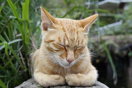 orange tabby cat sleeping on rock surrounded with grass