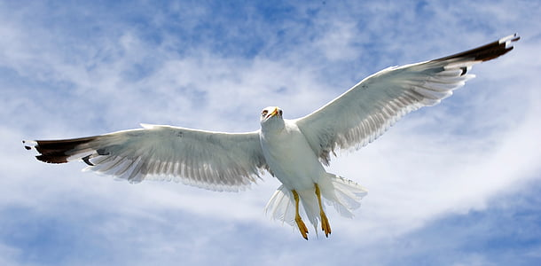 worm's eye view of white bird