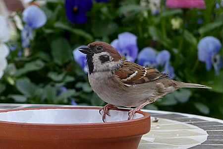 brown and gray feathered bird on top of brown plant pot