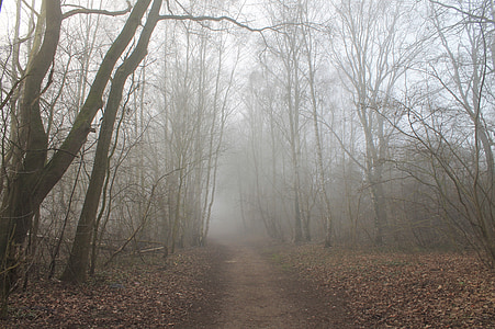 pathway through forest during fog
