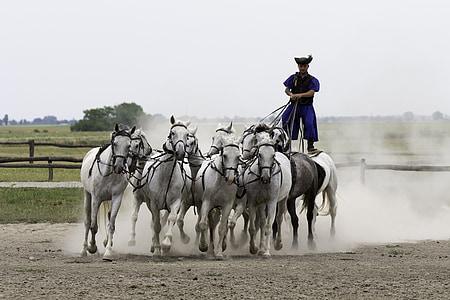 man riding white horses during daytime