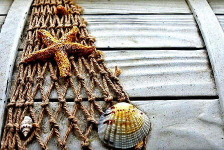 shell and starfish on brown net decor
