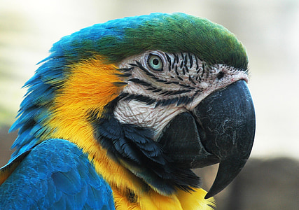 photography of green and yellow parrot