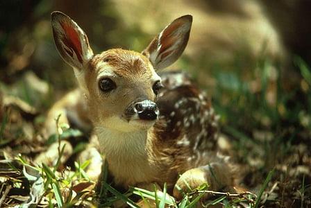 macro photography of brown deer