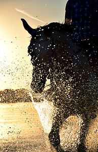person riding a black horse