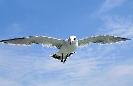 white seagull flying during daytime