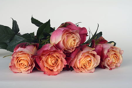 pink and yellow roses on white background