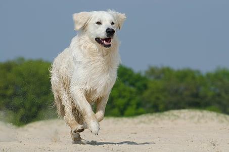 light golden retriever running on gray sand field during daytime