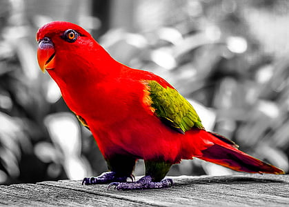red and green bird in selective color photography