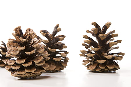 pine cones on white surface