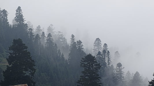 green trees covered in fog