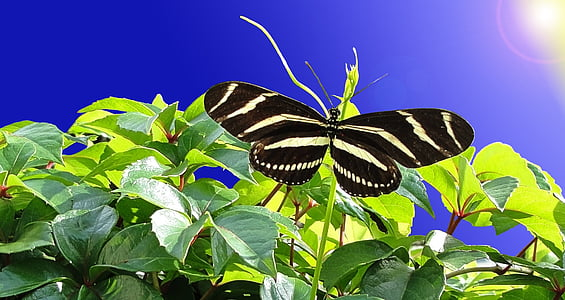 black and white stripe butterfly on green leaf