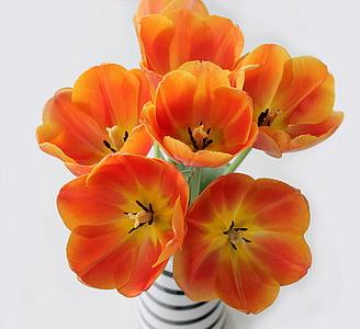 orange polix flowers