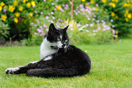 selective focus photography of tuxedo cat lying on grass field