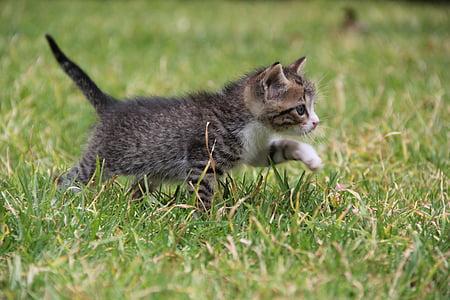 gray Tabby kitten on green grass during daytime