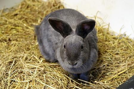 gray rabbit on brown hay
