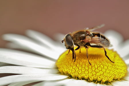honey bee perching on white and yellow petaled flower in close-up photography