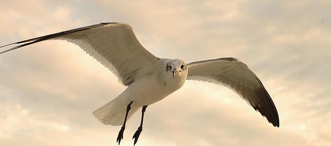 white bird flying under white clouds
