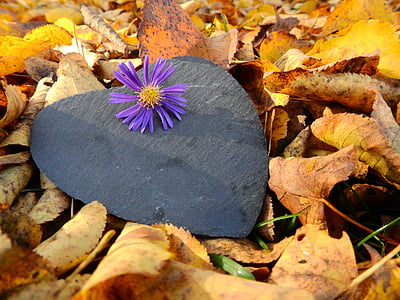 purple daisy flower on black heart board surrounded with leaves