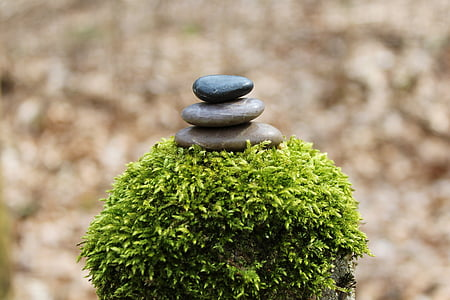selective focus photo of stone stack on top of green plant