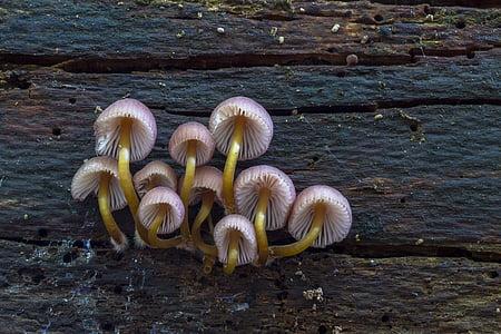 white-and-yellow mushrooms