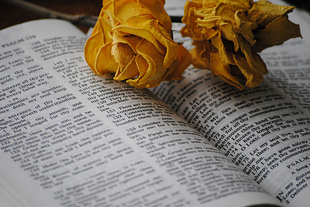 two flowers on book page