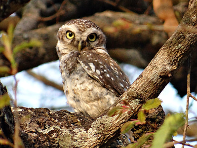 brown owl beside tree branch