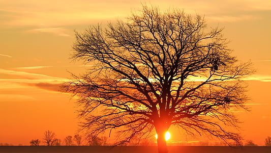 bare tree during dawn