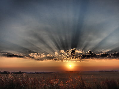 sunset above field of flowers panoramic photography