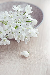 selective focus photography of white petaled flowers on a plate