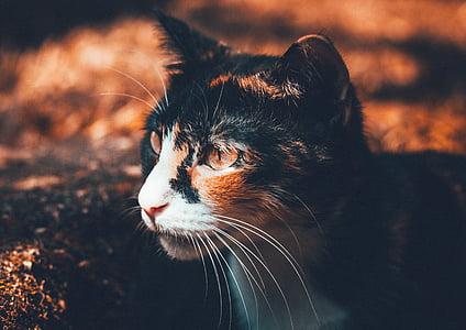 close up photography of black, orange, and white cat