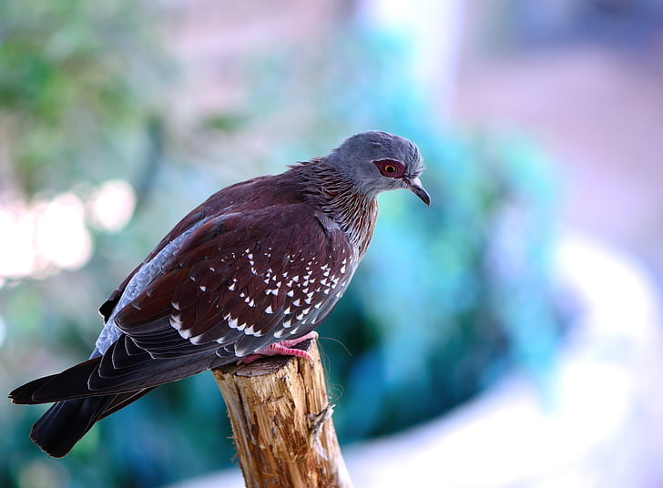selective focus photography of brown and blue bird