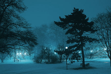 photography of park during nighttime