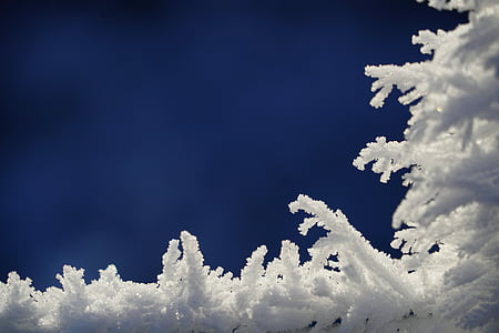 shallow focus photography of white snow