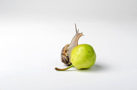 snail on green fruit
