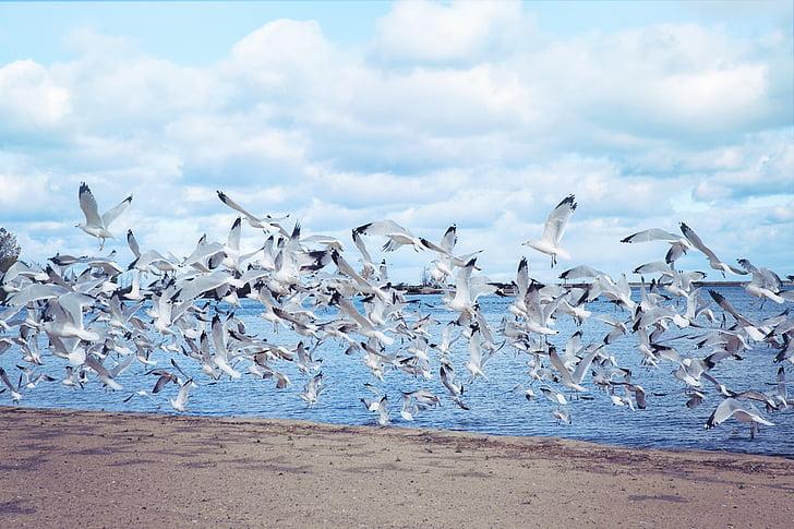 flock of bird flying above sea shore