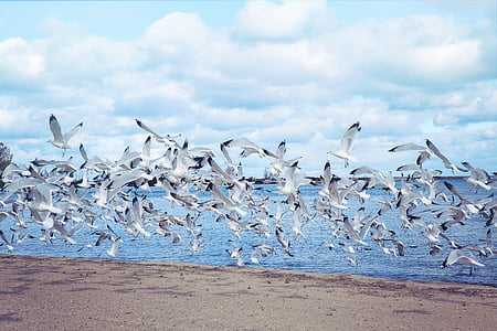 flock of bird flying above sea shore