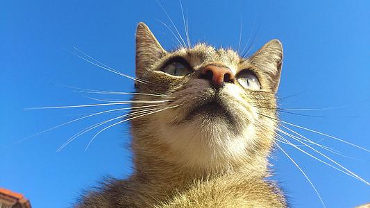orange tabby cat close up photography