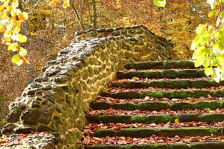photo of staircase filled with fallen leaves