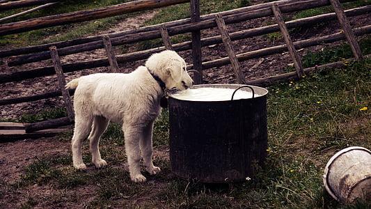 golden retriever puppy during daytime