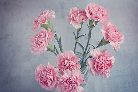 pink carnations centerpiece close up photo