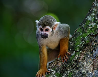 selective focus photography of primate on tree branch