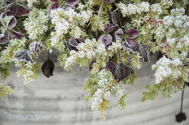 Royalty free photo white and purple flowers in gray pot pickpik white and purple flowers in gray pot mightylinksfo
