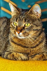 Tabby cat on yellow fabric