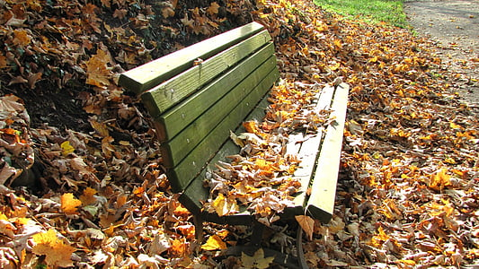 gray wooden bench surrounded by dried leaves