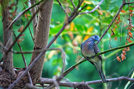 shallow focus photography of gray and blue bird