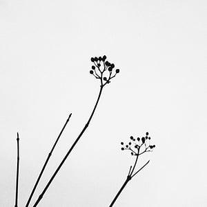black painting of flower